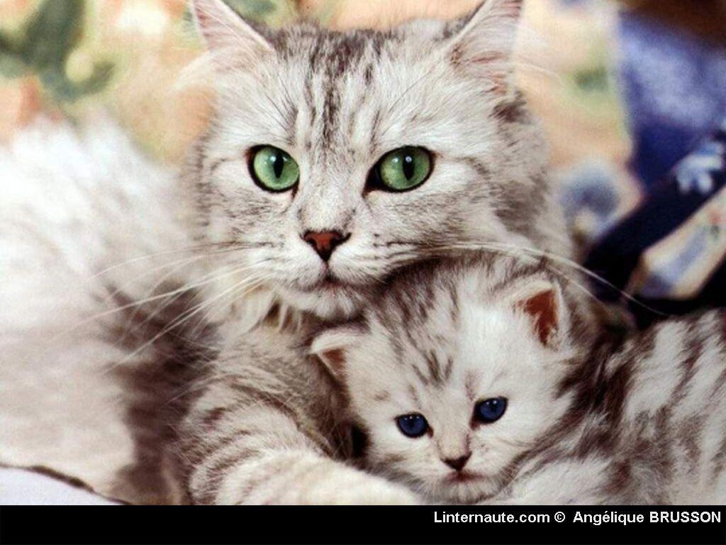 Fond d ecran - Image de petit chat ...